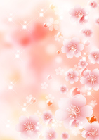 Sakura background [3532999] Cherry