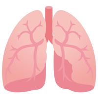 Medical explanation lung [3535152] Organ