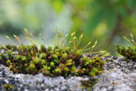 Moss that grows on rocks Stock photo [3639483] Moss