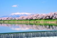 Spring Shiraishigawa Stock photo [3646429] Sakura