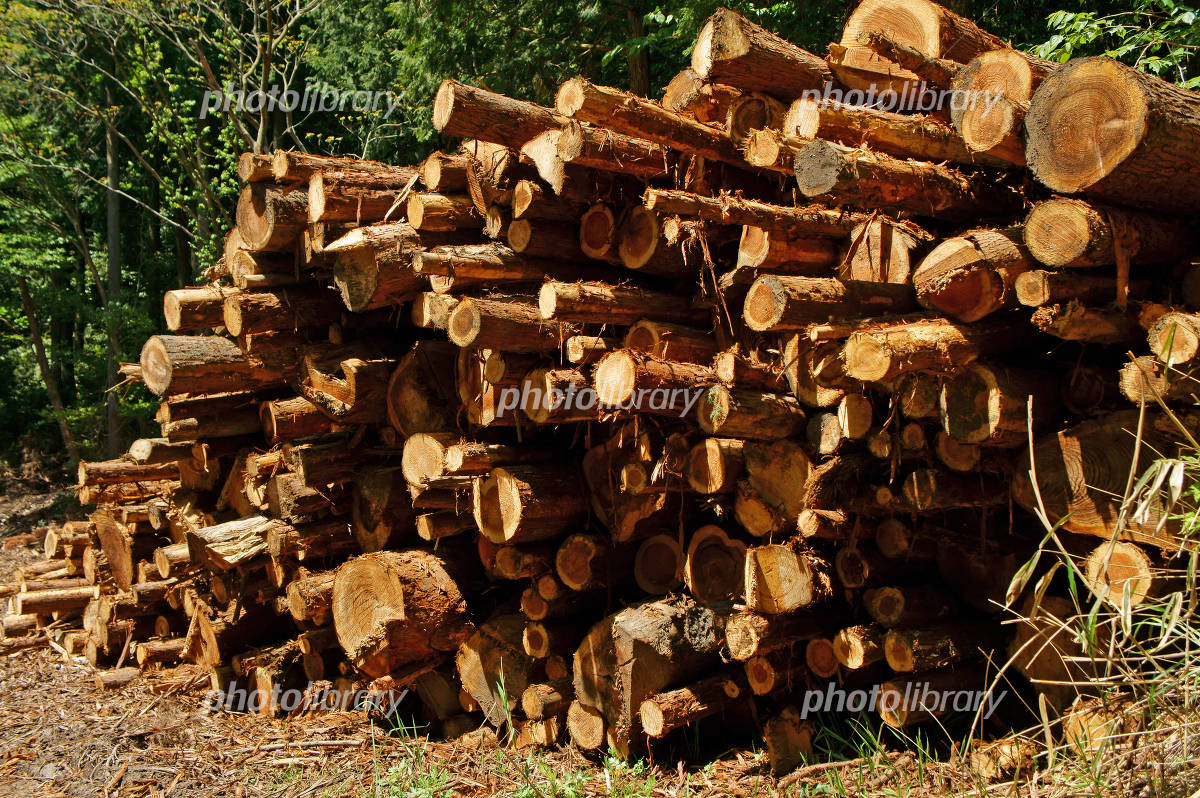 Timber from forest thinning Photo
