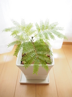 Windowsill of Ebafuresshu Stock photo [3754528] Plant