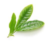 Leaves of tea Stock photo [3756241] Tea