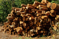 Timber from forest thinning Stock photo [3757448] Wood