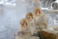 Child monkey and the hot spring of wild Stock photo [3758147] Monkey