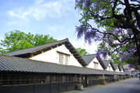 Wisteria and Sankyo warehouse Stock photo [3758807] Wisteria