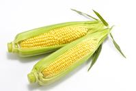 Sweet corn Stock photo [3872719] Corn