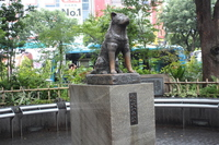 Hachikō Stock photo [3963039] Hachiko