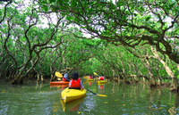Explore the mangrove in the kayak (canoe) Stock photo [3969335] Mangrove