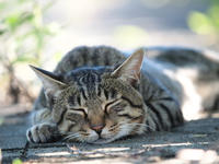 Cat sleeping in the shade Stock photo [3972537] Cat