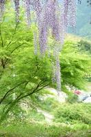Fresh green and Fuji Stock photo [3973010] Verdure