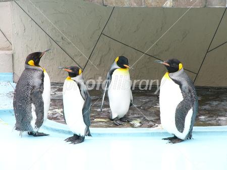 4匹のペンギン