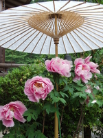 Button and the Japanese umbrella Stock photo [118971] Nara
