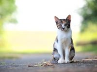 Kitten tortoiseshell Stock photo [4058978] Cat