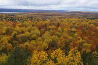 Algonquin of autumn leaves Stock photo [4119485] Canada