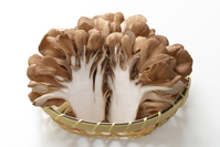 Maitake Stock photo [4259611] Maitake