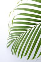 Palm leaves Stock photo [4261189] Foliage