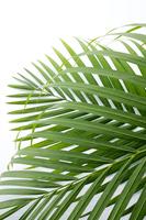 Palm leaves Stock photo [4261282] Foliage