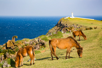 Lighthouse and Yonaguni Horse Stock photo [4265134] Yonaguni
