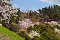 Kamiyama Forest Park Stock photo [4342000] Tokushima