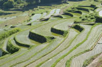 Kyushu of terraced rice fields Stock photo [4418630] Terraced
