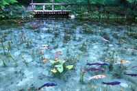 Pond of Gifu Prefecture Seki Monet Stock photo [4513964] Gifu