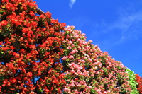 Begonia and blue sky Stock photo [4514417] Begonia