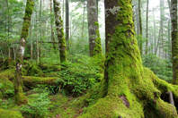 Forest of moss Stock photo [4516482] moss