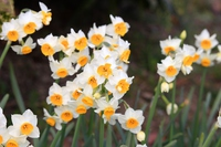 Cute daffodil Stock photo [4903262] Narcissus