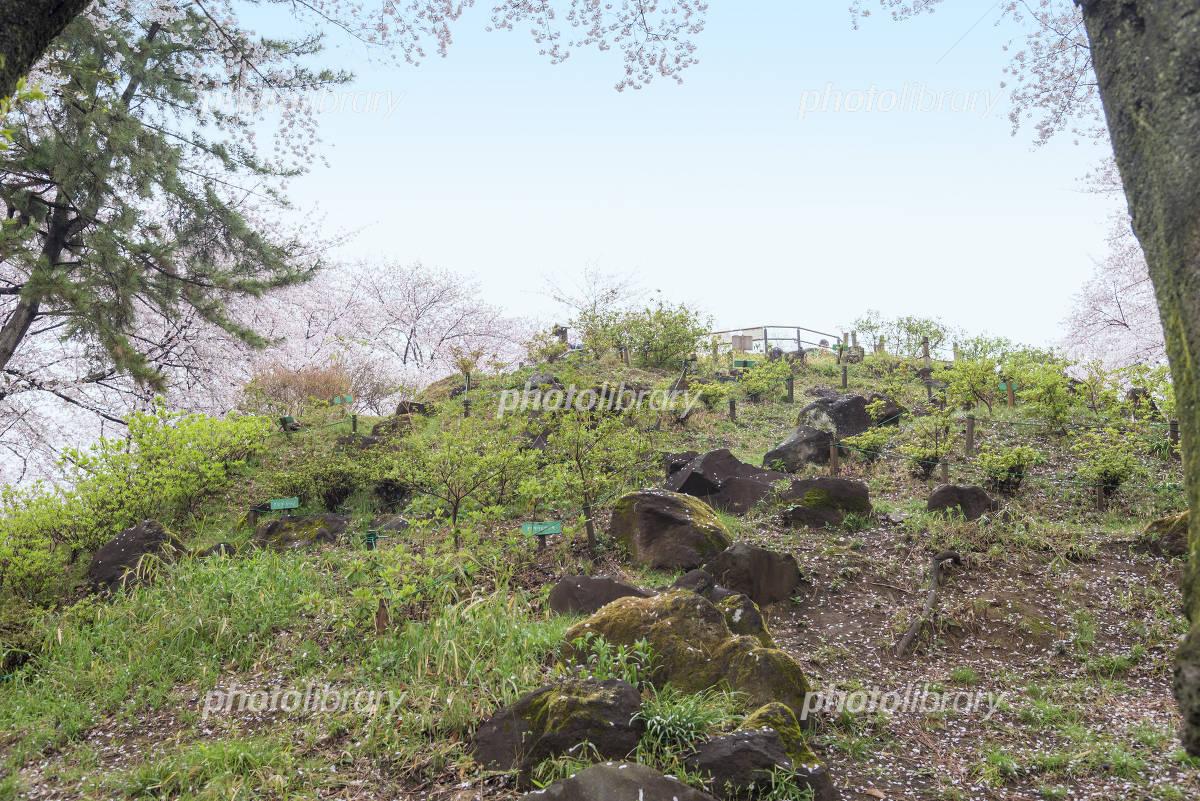 公園 山 戸山 箱根