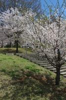 城山公園 階段