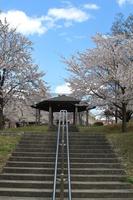 城山公園 散歩道の階段