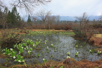 Hirugano Mirai Botanical Garden Stock photo [5094932] Hirugano