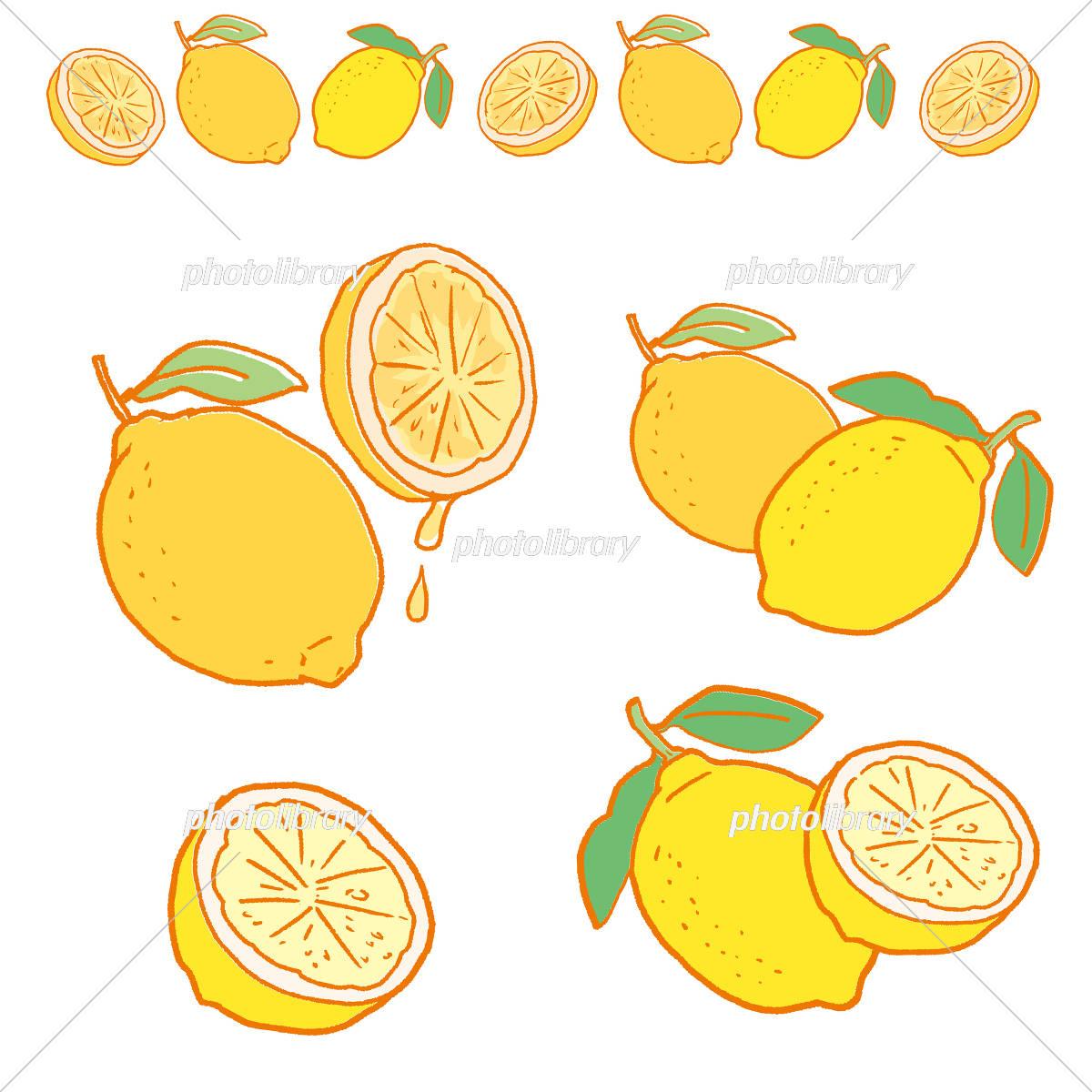 レモン イラスト イラスト素材 5191103 フォトライブラリー