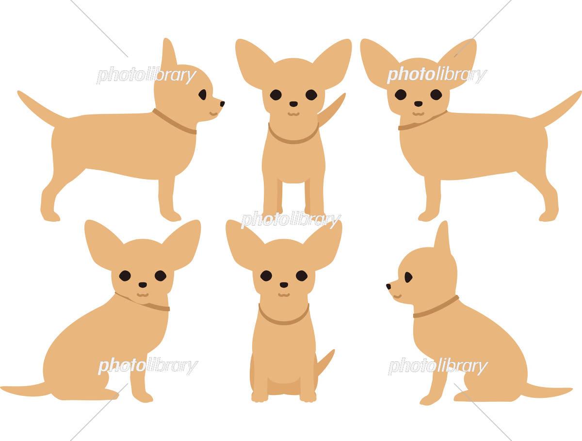 犬 チワワ ポーズ イラスト素材 5642871 フォトライブラリー