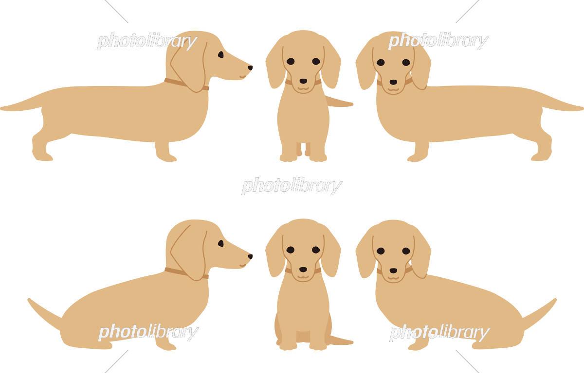 犬 ダックスフント ポーズ イラスト素材 5642870 フォトライブ