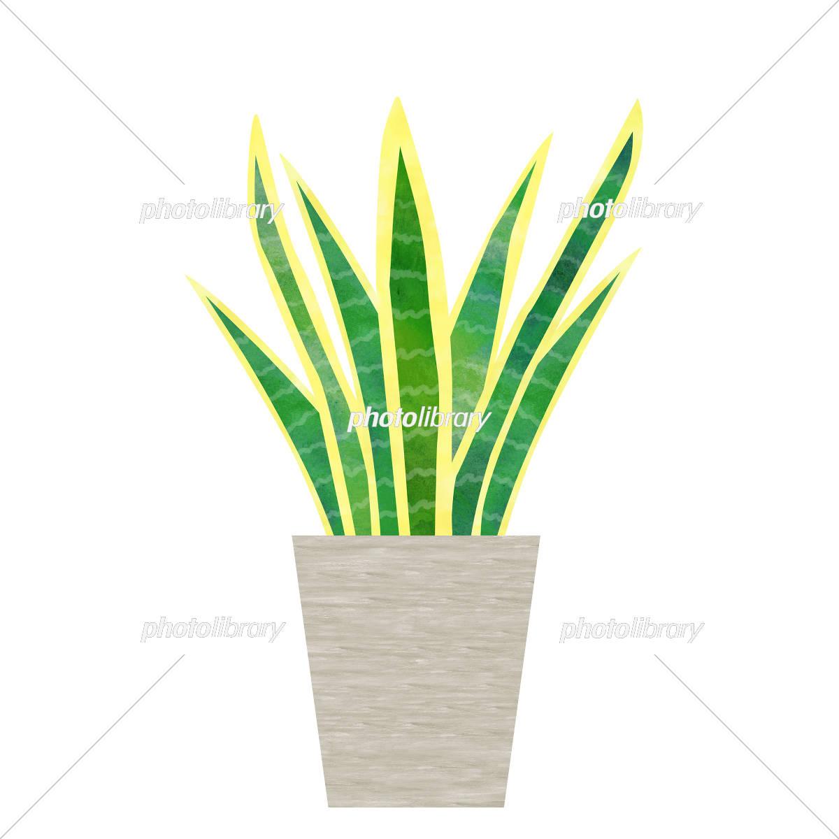 観葉植物 サンスベリア イラスト素材 5675150 フォトライブラリー