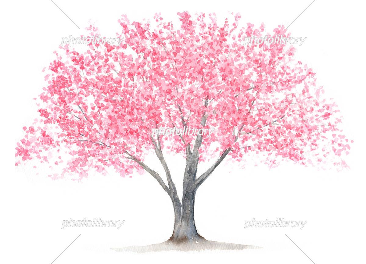 木の水彩画イラスト イラスト素材 2575425 無料 フォトライブ