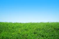 Grassland and blue sky Stock photo [193149] Grass