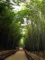 Path of bamboo Stock photo [252449] Bamboo