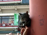 猫と三社祭