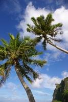 Guam fifibeach Stock photo [17043] Southern