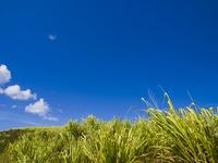 Kauai grassland and blue sky Stock photo [622039] Hawaii