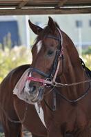 Horse Stock photo [626747] Horse