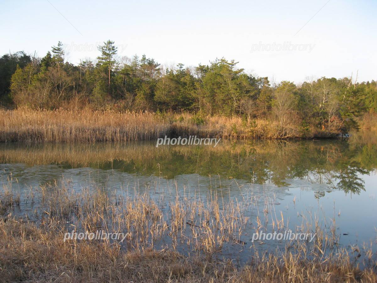 冬の沼地 写真素材 [ 707830 ] - フォトライブラリー photolibrary