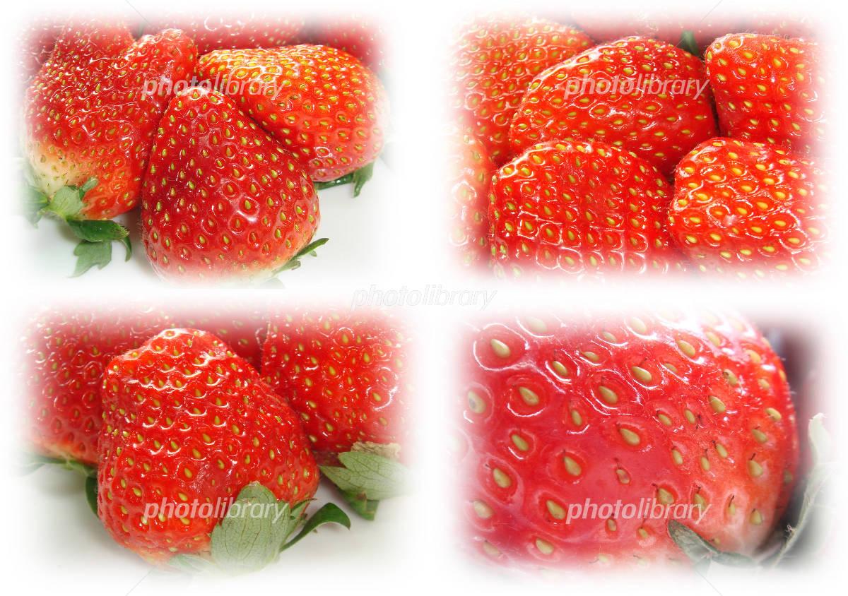 苺の壁紙 写真素材 714714 フォトライブラリー Photolibrary