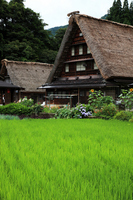Gokayama Gassho-style Stock photo [711763] Gokayama