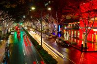 Zelkova tree-lined Illumination Stock photo [712250] Tokyo