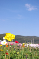 Poppy and mountains and blue sky photo Stock photo [716494] Phlox