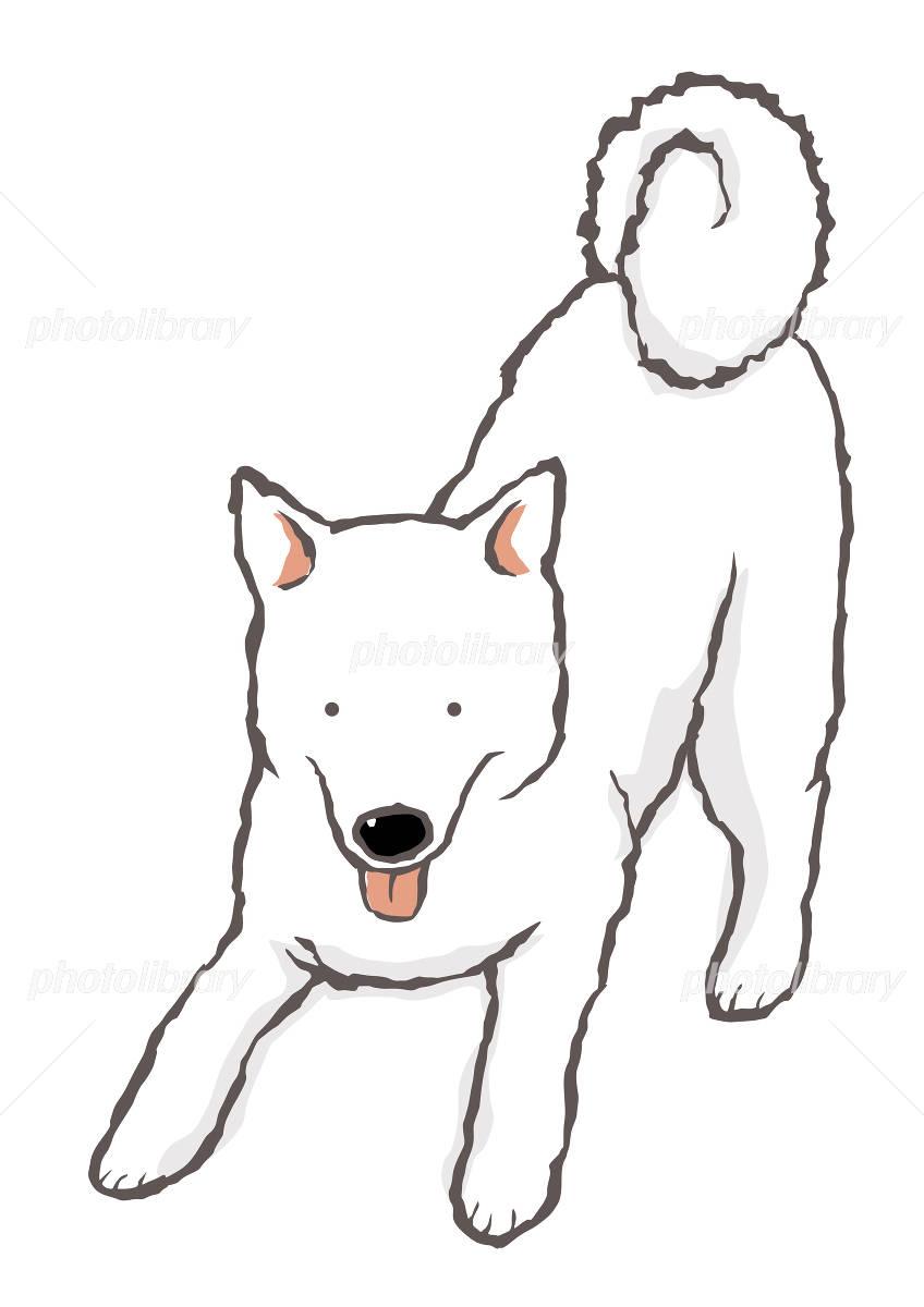 プリケツで誘う白日本犬 イラスト素材 799044 フォトライブラリー
